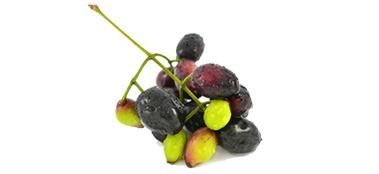 Plod jambolanske šljive