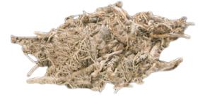 Rizom biljke kutki